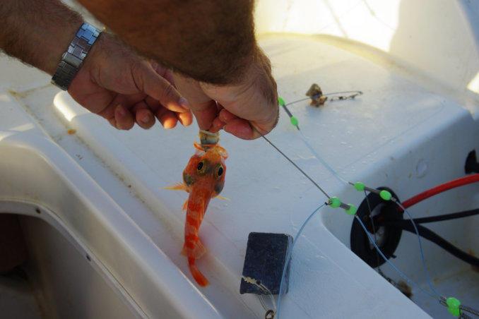 dagje zeevissen op karpathos griekenlandeen dagje zeevissen op karpathos